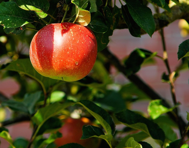 arboles frutales en León